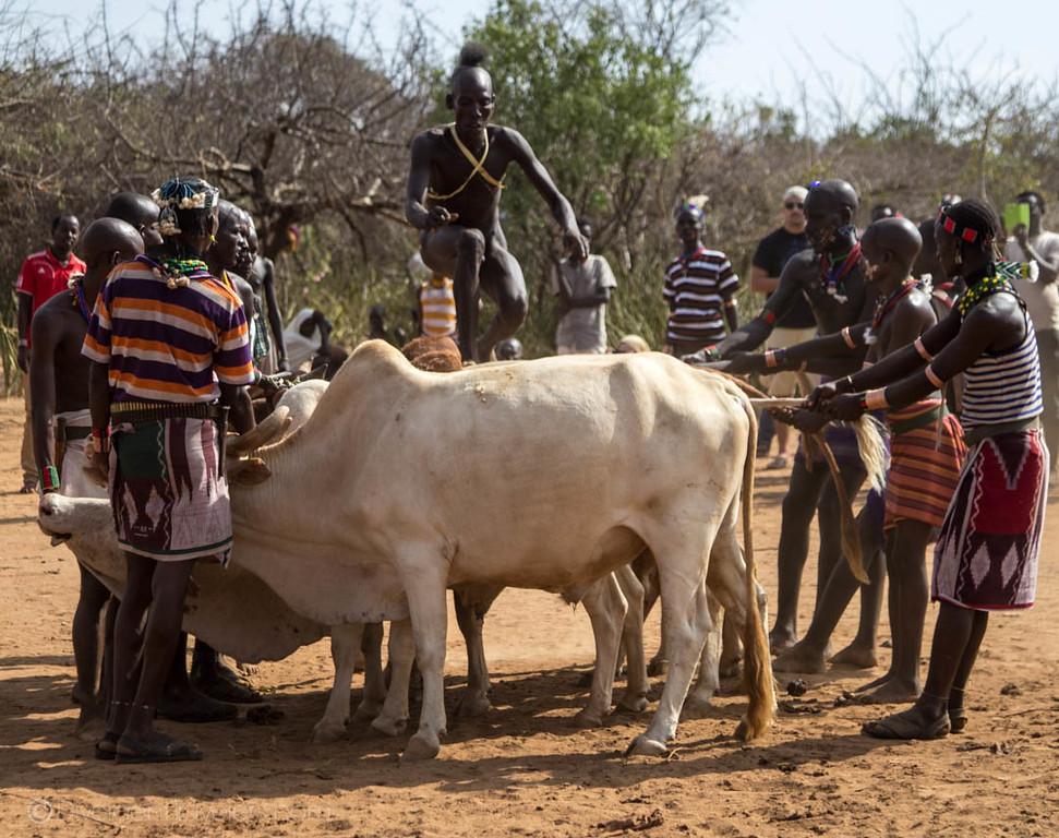 The Hamer - Ethiopian tribes