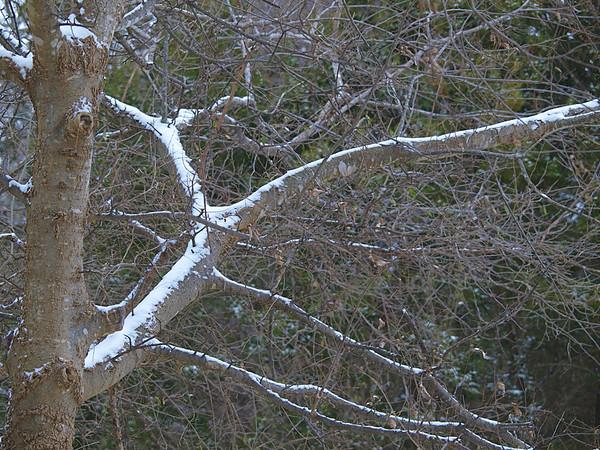 Snow Pics 2.4.2011