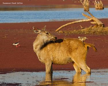 India Mammals