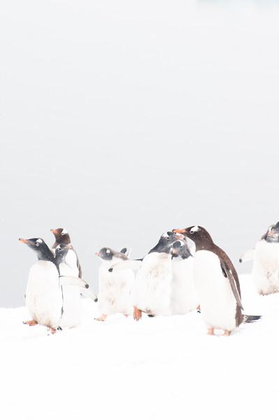 Antarctica 2015 (66 of 99).jpg