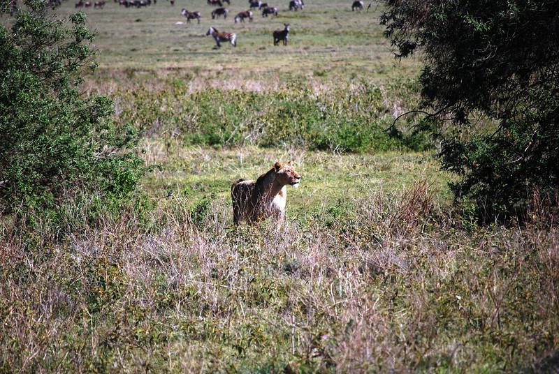 Ngorongoro (87).JPG