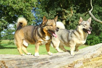 Hondenfotos