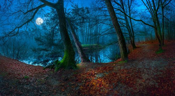 Fine Art natuur foto van de vijver Meuwel Achter de Berg in Nistelrode met reflecties van de bomen in het bos en het eilandje in de mist van het ochtendlicht.