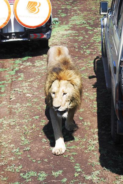 Ngorongoro (103).JPG