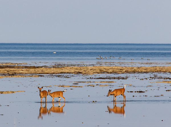 Programme des Safaris Photo à Anticosti