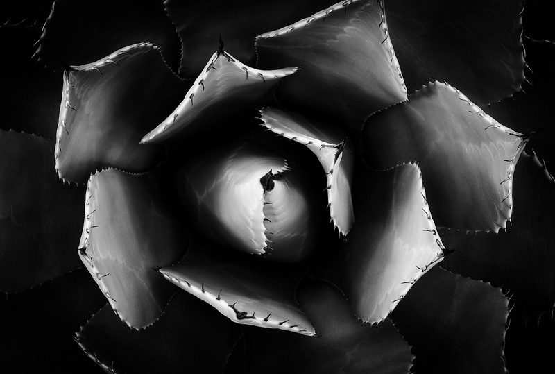 Sarah-Marino-BW-Dark-Agave-1200px.jpg