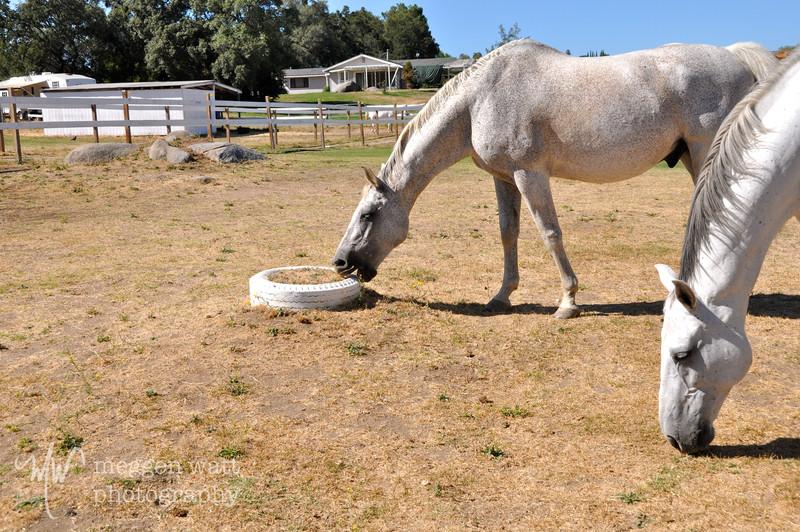 EB&Horses-042.jpg