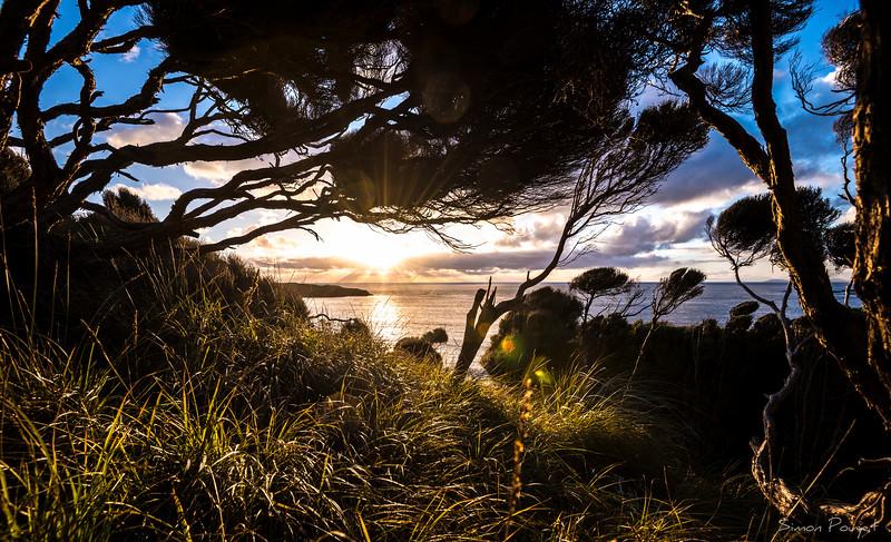 Stewart Island trees sunset.jpg