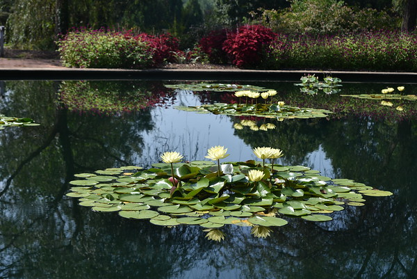 AL, Huntsville - Huntsville Botanical Garden, 2019