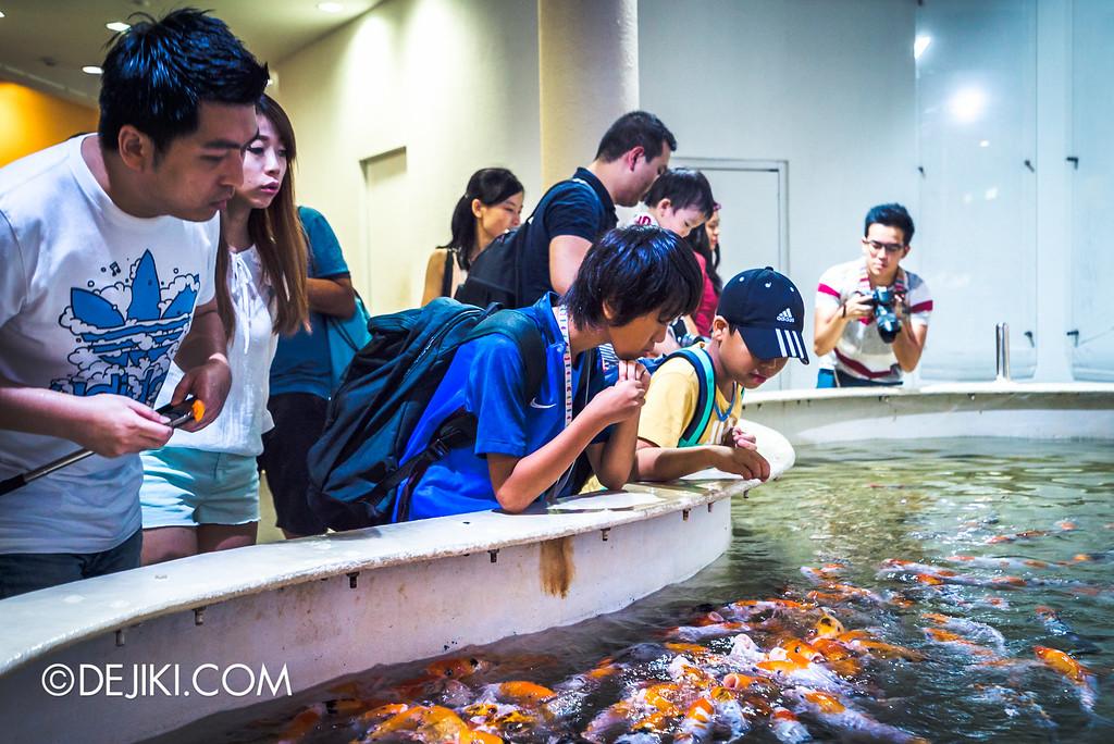 Underwater World Singapore - Koi feeding