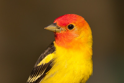 Best of Birds 2014