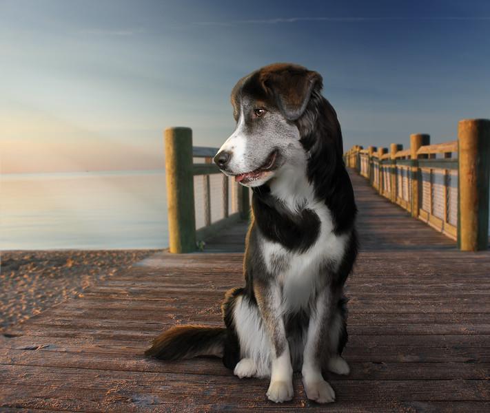 dog-pier.jpg