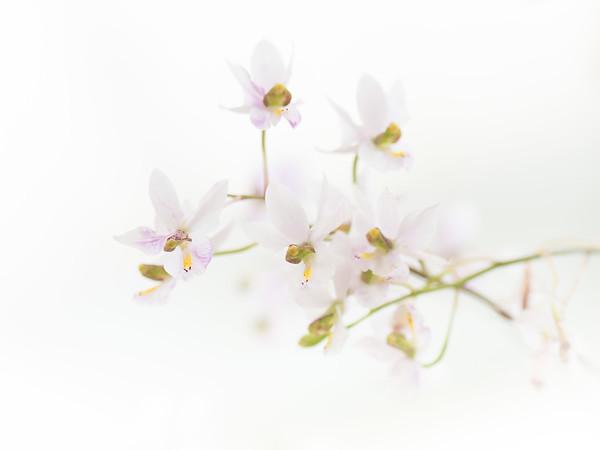 Orchideen Ausstellung