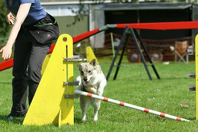 Juni 2014 - Workshop agility Friesland