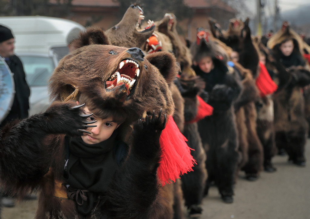 . In this Saturday, Dec. 30, 2017, picture Tudor Huluta, an 8-year-old, who returned from Britain to attend the parade, wears a bear fur costume while dancing in Asau, Romania. (AP Photo/Vadim Ghirda)