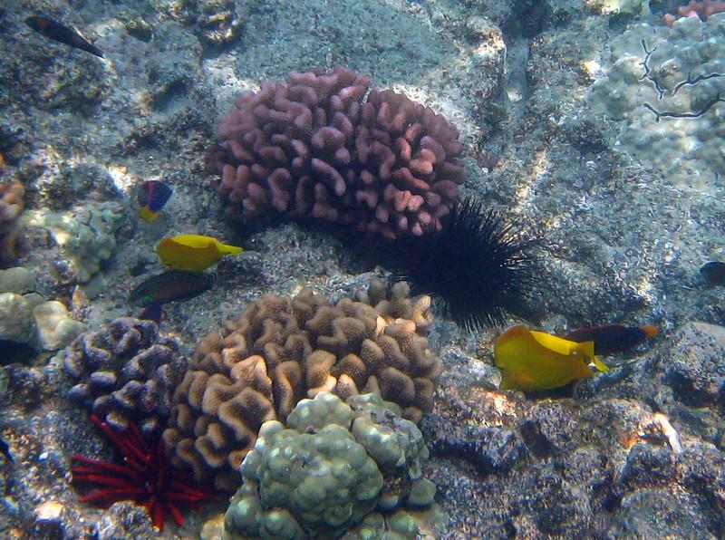 439- 20080416- Hawaii 20-Snorkelling IMG_0610.jpg