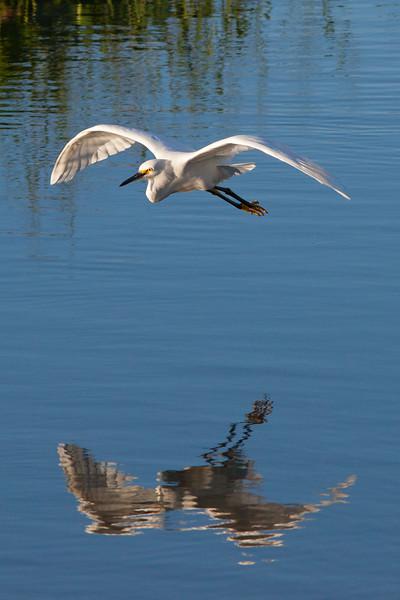 Sayulita-Birding in San Pancho 11.06.15