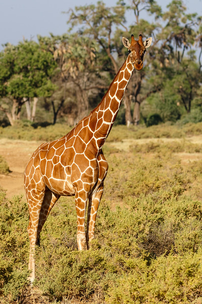 Kenya 2015-02324.jpg