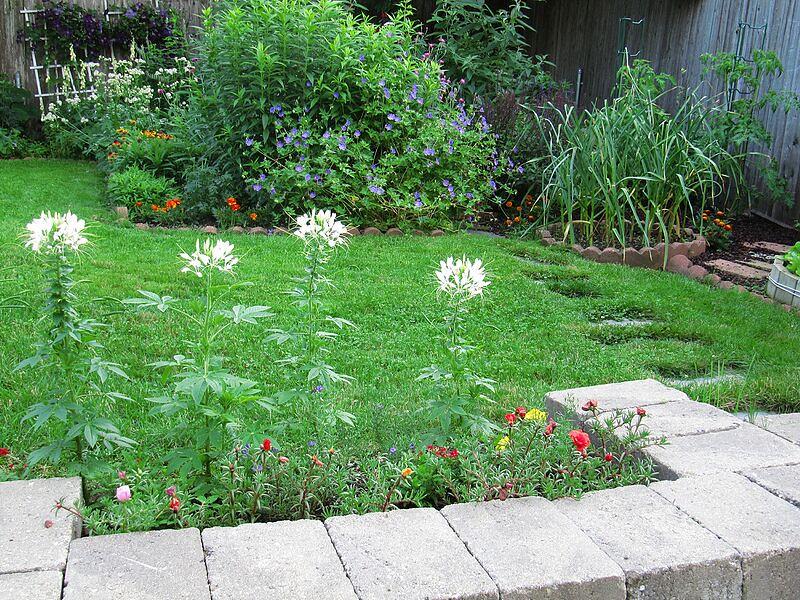 garden-2009-07-0763_std.jpg