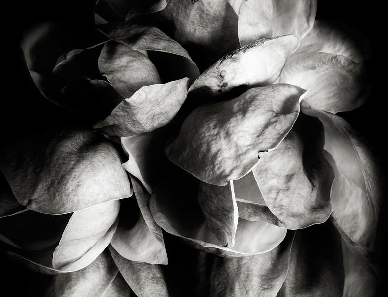 magnolia-05.jpg