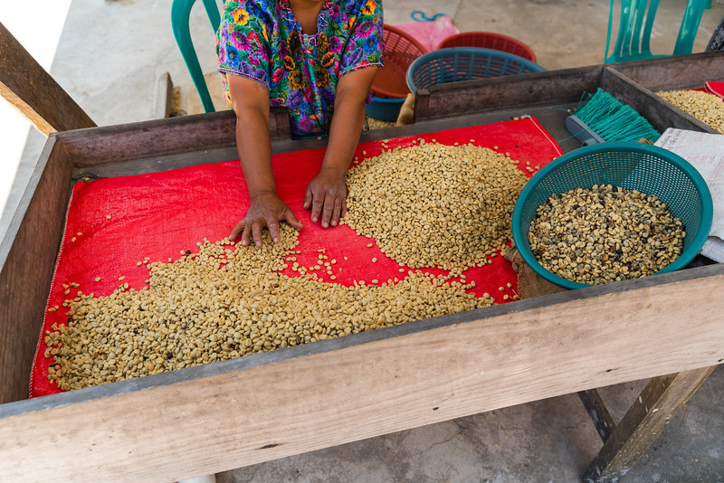Coffee Beans, Guatemala