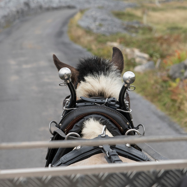 Back view of a horse pulling a carriage, Kilronan, Inishmore, Aran Islands, County Galway, Ireland