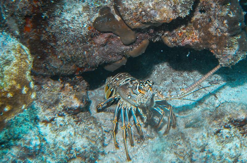 Dive Puerto Rico = Feb., 2013-Puerto Rico Dive Feb 2013-99-Edit-055.jpg