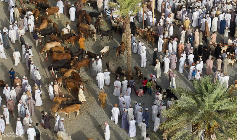 DJI_0090 copy- Oman.jpg