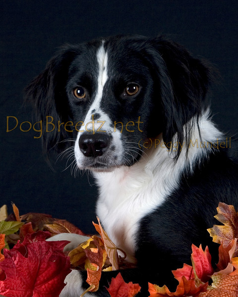 Camp Bow Wow Livermore - Jack Howe