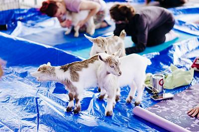 Santa Rita Ranch - Goat Yoga 2019 - Public Gallery