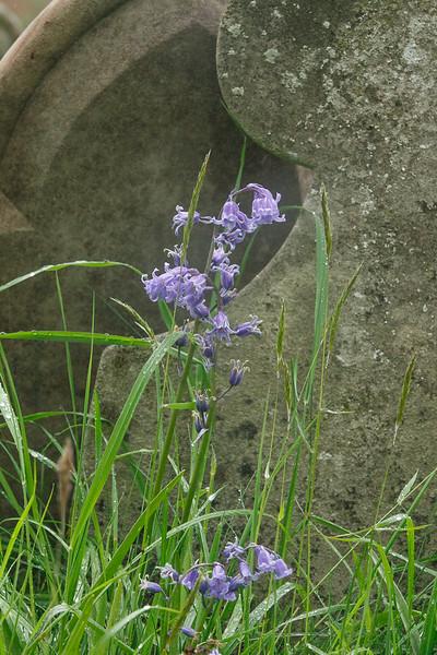20210515 - FRNC Flora Walk May - 062.jpg