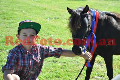 Pinjarra Equestrian Association Summer Breed Spectacular