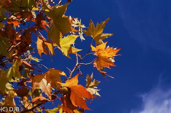 Fall in Folsom on Film