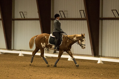 Horse 644