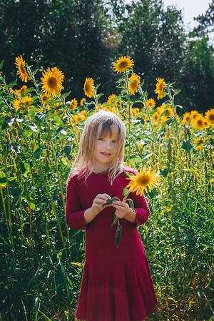 Sunflowers Warwas
