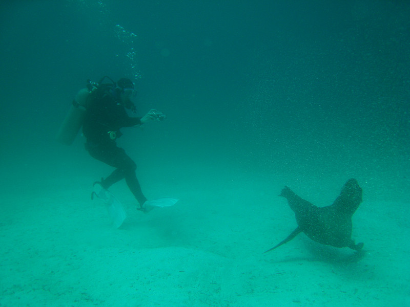 Diving in the Galapagos (110 of 392)