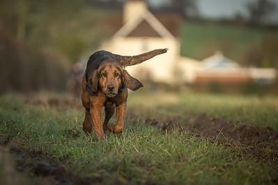 Burne Bloodhounds, Dunston Heath, 26th January 2014