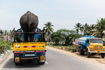 Southern India 2016_Elephant Festival/Palakkad