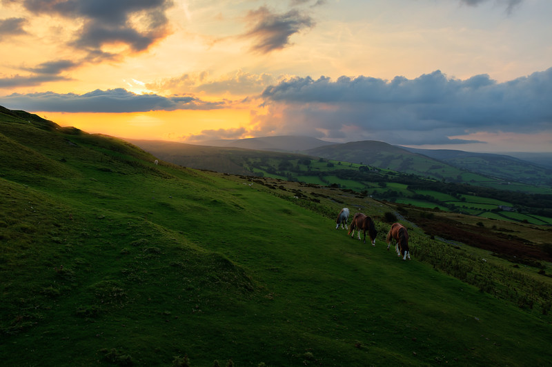 Horses, Brecon, South Wales
