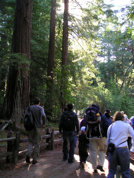 We briefly followed a volunteer-led nature talk along the Redwood Trail.