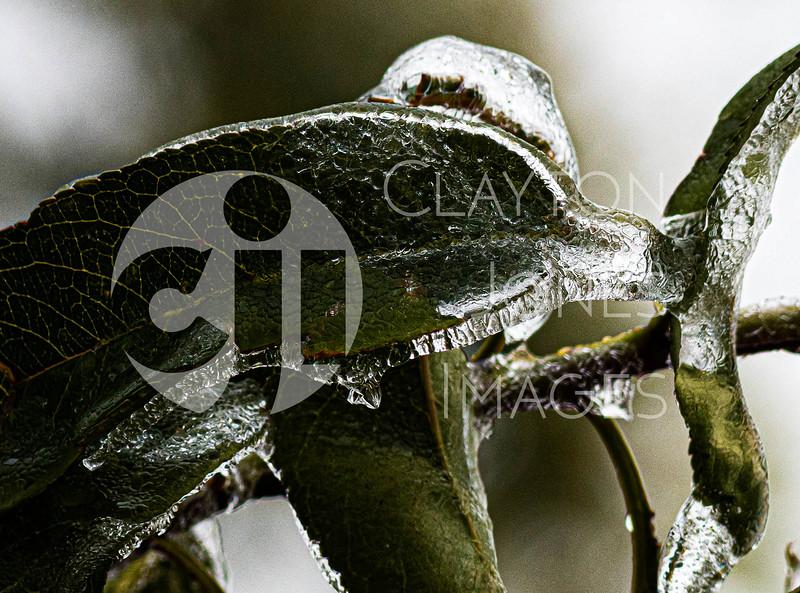 icy_rain_10.27.2020-9_crop.jpg