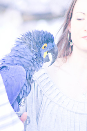 Blue Bird on my Shoulder