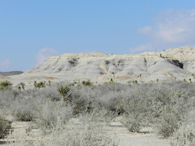 yellow and gray dune.jpg