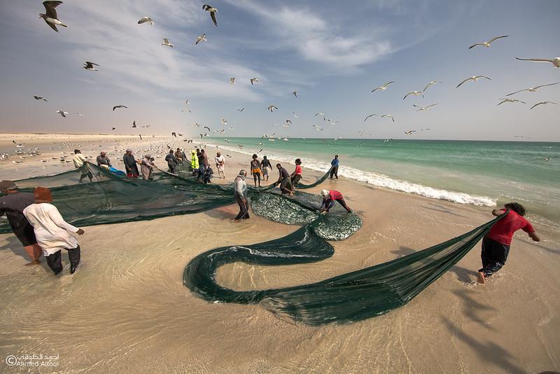 Sardine Season (53)- Dhofar.jpg