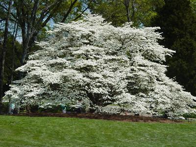 2004 Botanical Gardens