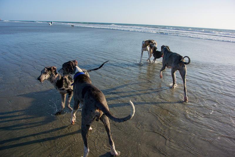 dogs_beach-24.jpg