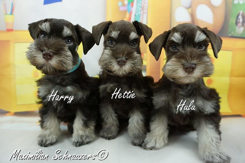 Amy Pups 007.jpg