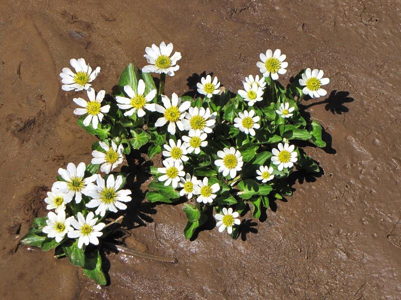 amh FLOWERS (1202).jpg