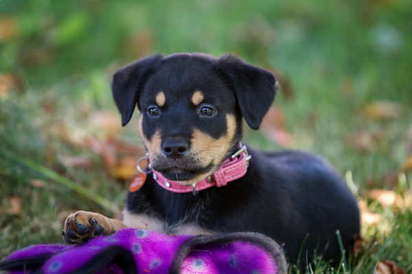 Dogs - ICAN - Invermere Companion Animal Network