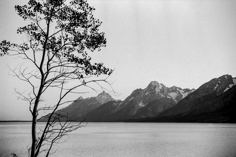Yellowstone + Grand Tetons | Summer 2002